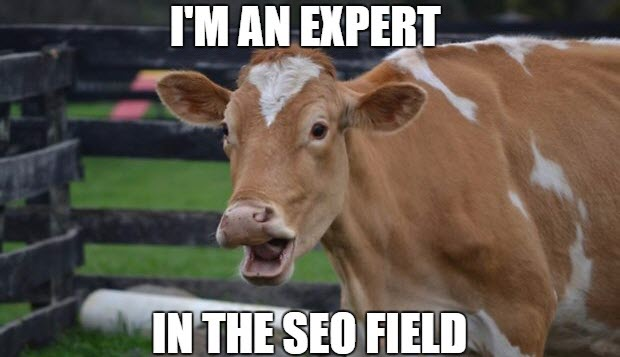 become-seo-expert