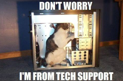 tech-savvy-cat